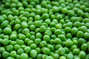 Pea Protein floods the scene